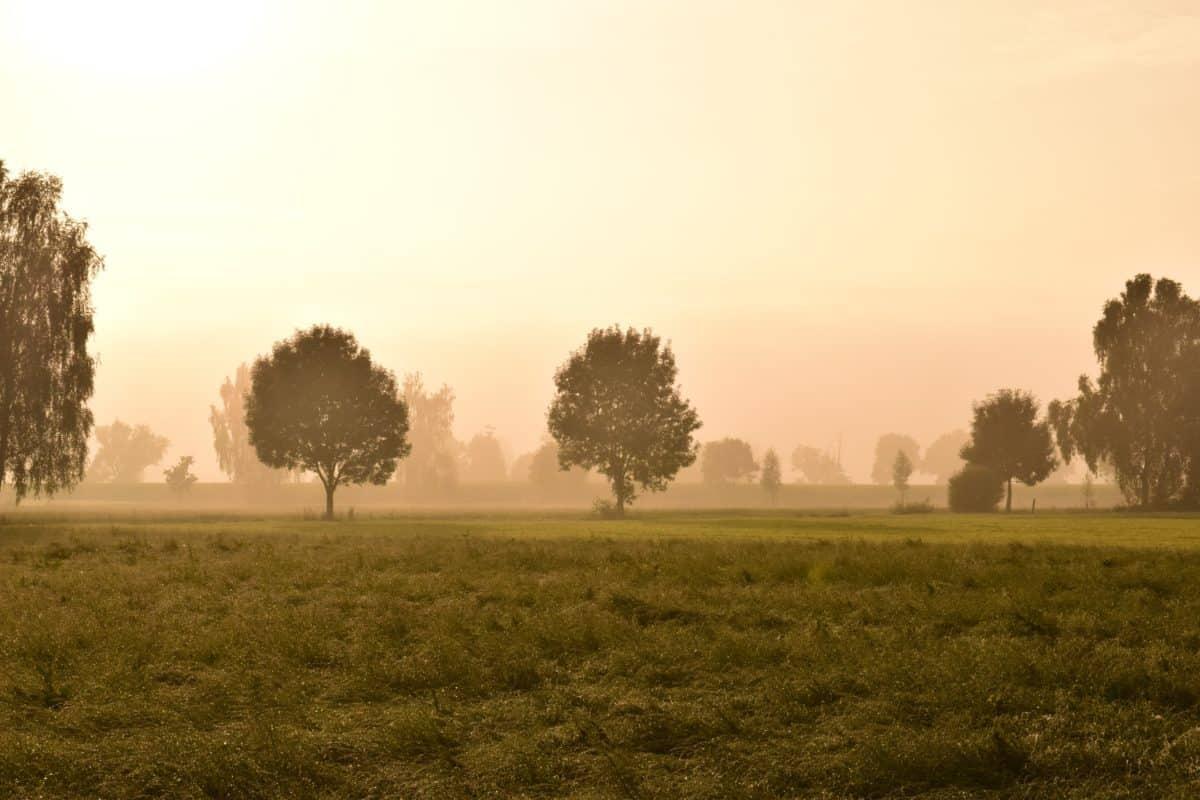 Sonnenuntergang, Baum, Dämmerung, Nebel, Nebel, Feld, Landschaft, Landschaft