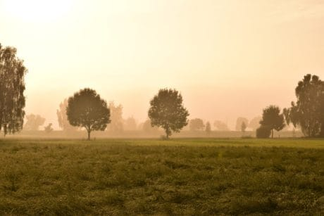 sunset, tree, dawn, fog, mist, field, countryside, landscape