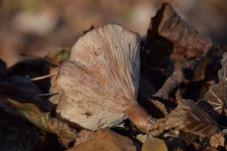 mushroom, nature, leaf, wood, fungus, brown