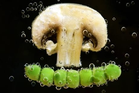 mushroom, water, bubble, underwater, food, liquid, macro, decoration