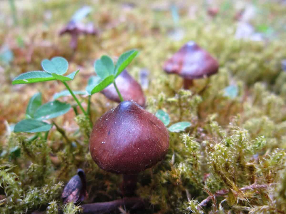 mushroom, grass, leaf, flora, nature, moss