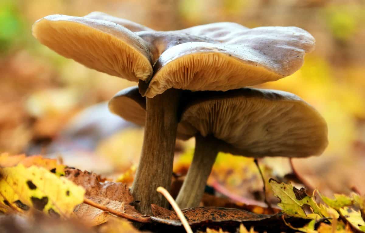 fungus, wood, mushroom, leaf, nature, ecology, environment