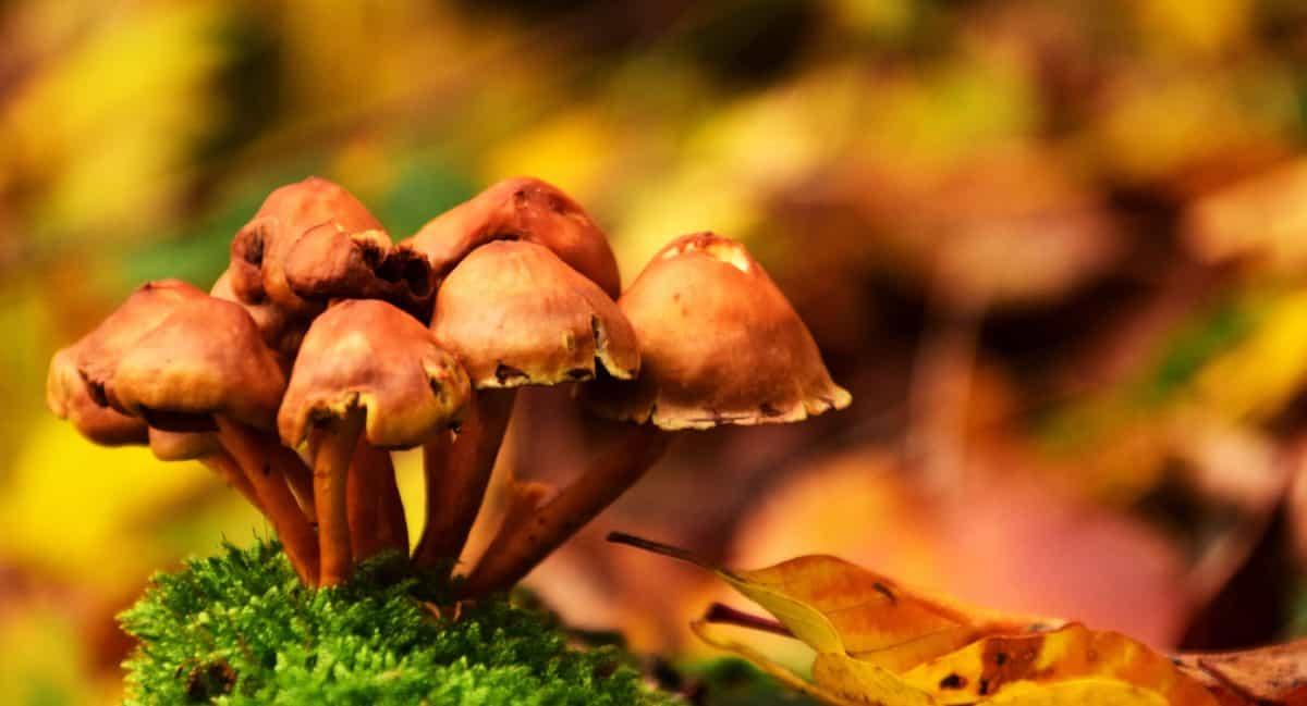 Moss, champignon brun, bois, champignon, nature, lumière du jour, biologie