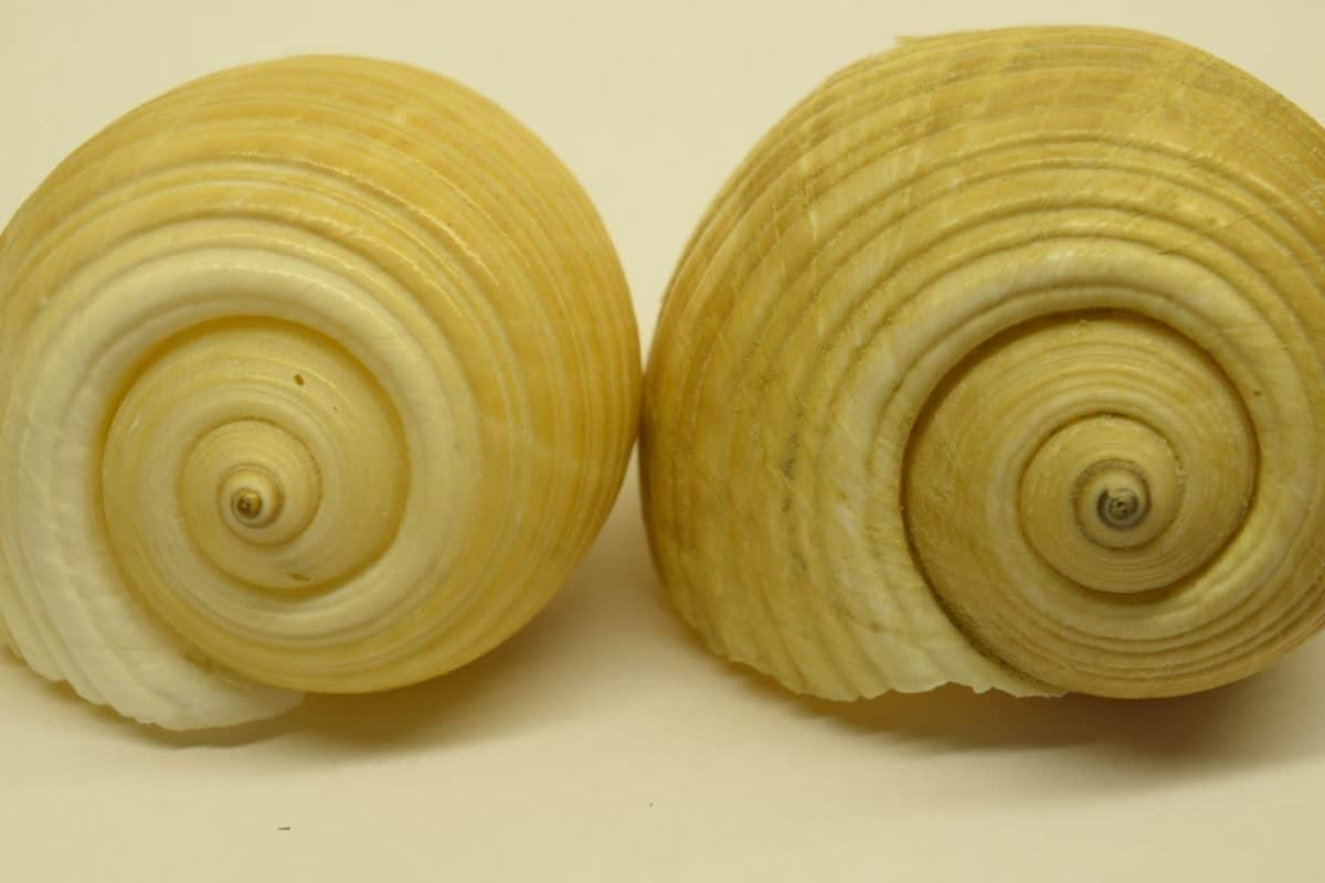 snail, shell, animal, invertebrate, amcro, detail