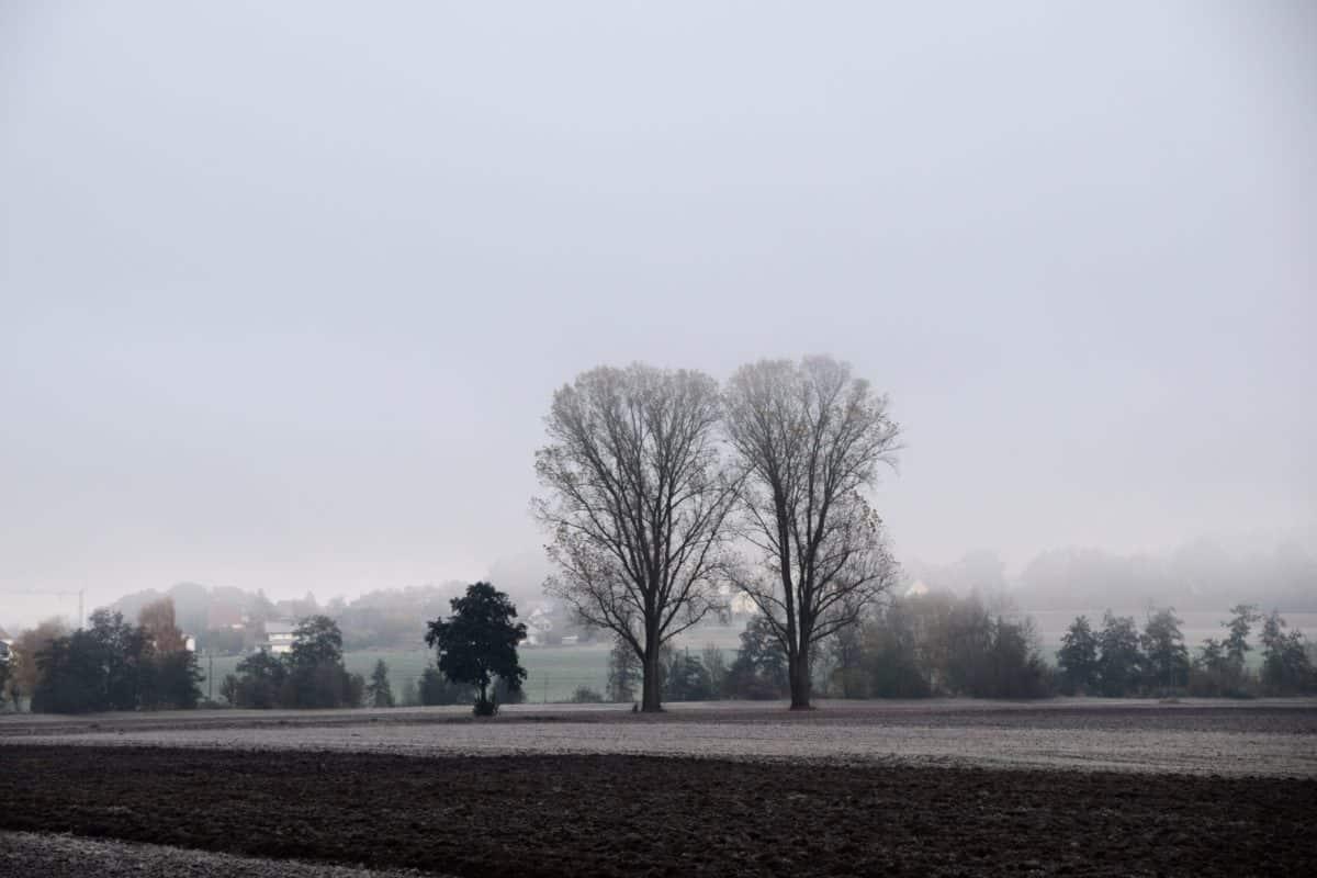 paesaggio, albero, natura, nebbia, cielo, neve, all'aperto