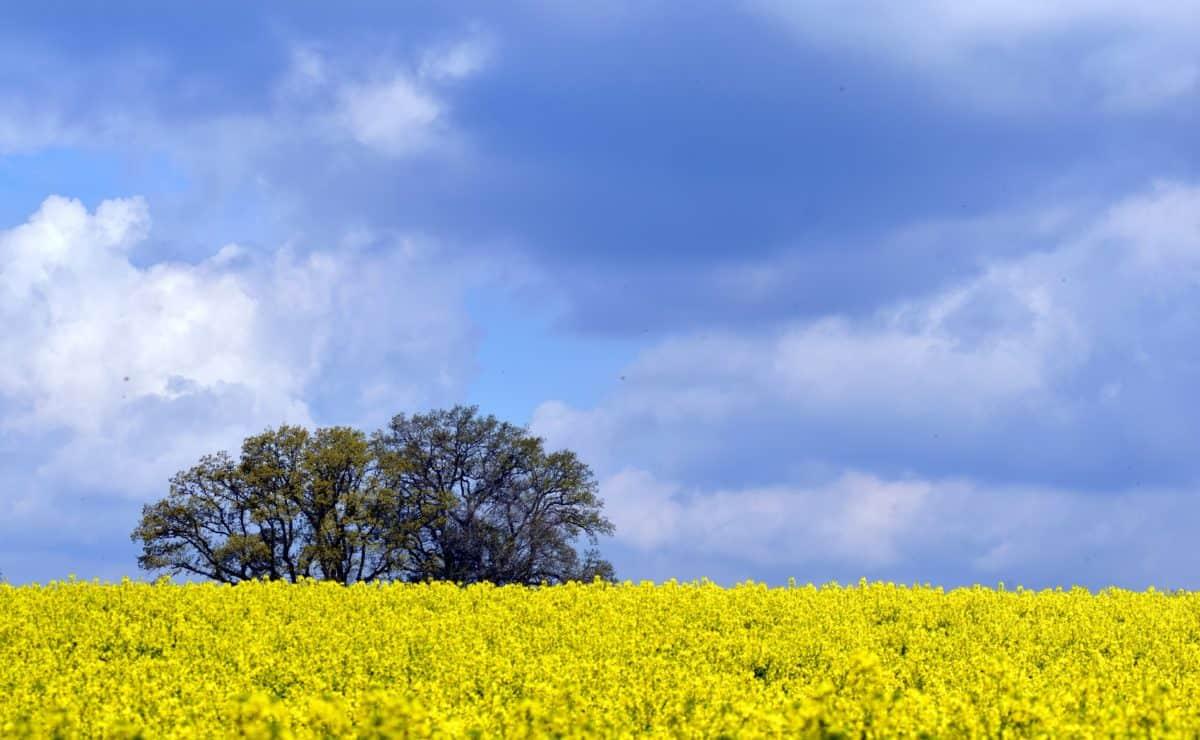 Feld, Himmel, Landwirtschaft, Sommer, Blume, Landschaft, Natur