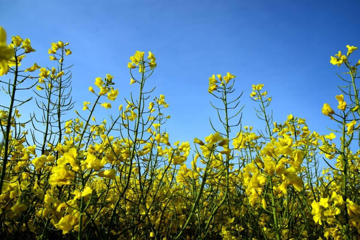 verano, hoja, árbol, agricultura, campo, naturaleza, flora, flor