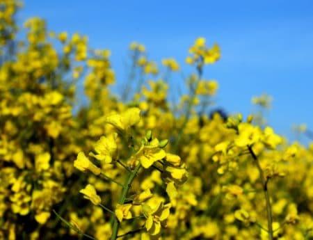 bidang, pertanian, flora, musim panas, sifat, bunga, Kolam