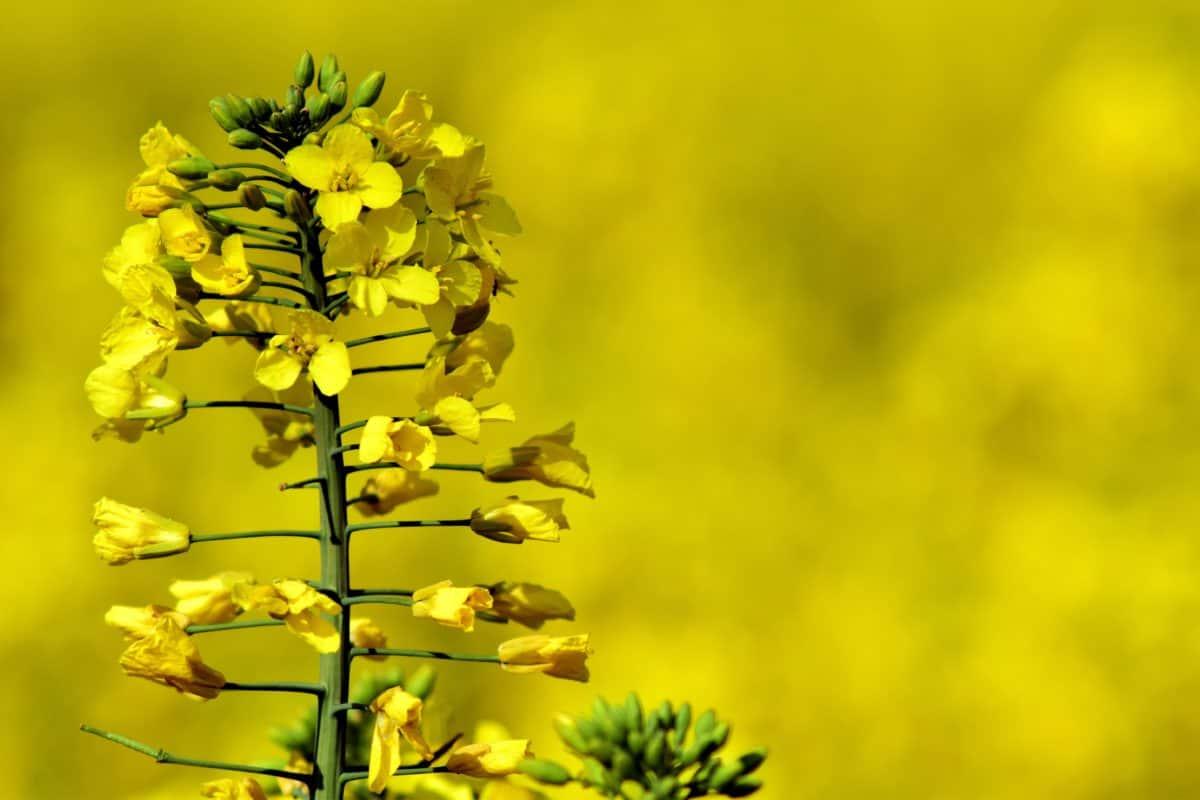 sommaren, flora, blomma, natur, utsäde