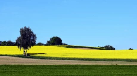 paysage, l'agriculture, nature, agriculture, champ, campagne, arbre