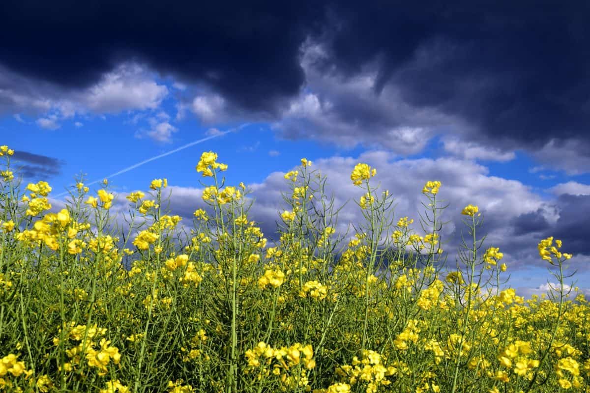 field, flower, flora, summer, nature, herb, plant
