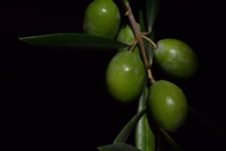 nature, leaf, food, olive, green