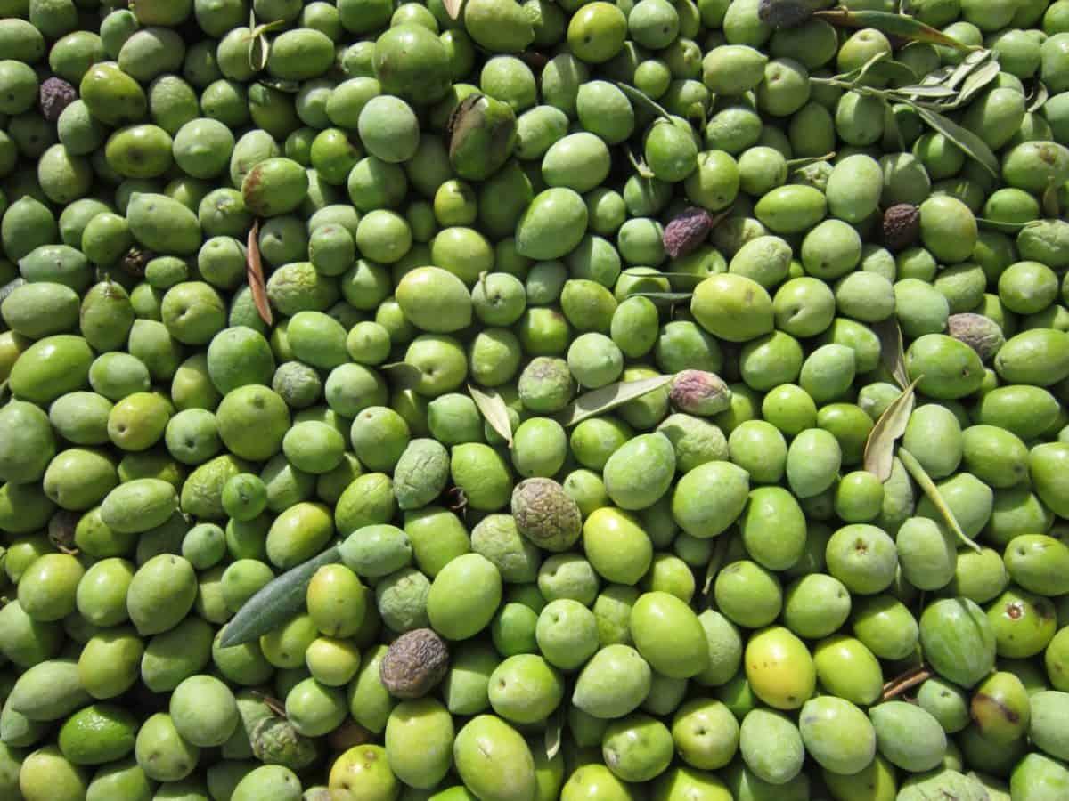 oliva, vegetales, especias, verde, comida, agricultura orgánica,