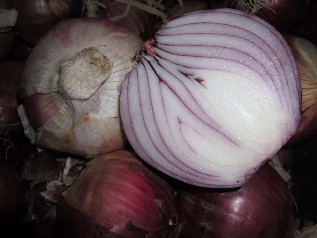 food, root, onion, vegetable, spice, macro, detail