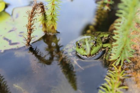 nature, water, daylight, frog, amphibian, swamp