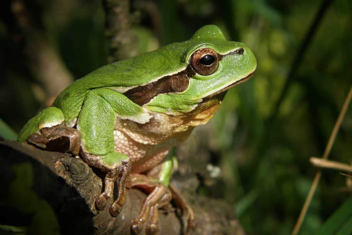 wildlife, green, rainforest, frog, amphibian, nature, eye