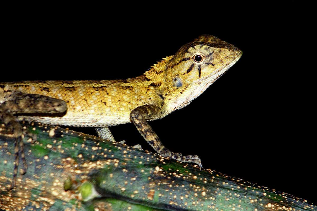 animal, nature, reptiles, la faune, lézard, caméléon, oeil