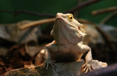 reptile, nature, wildlife, lizard, animal