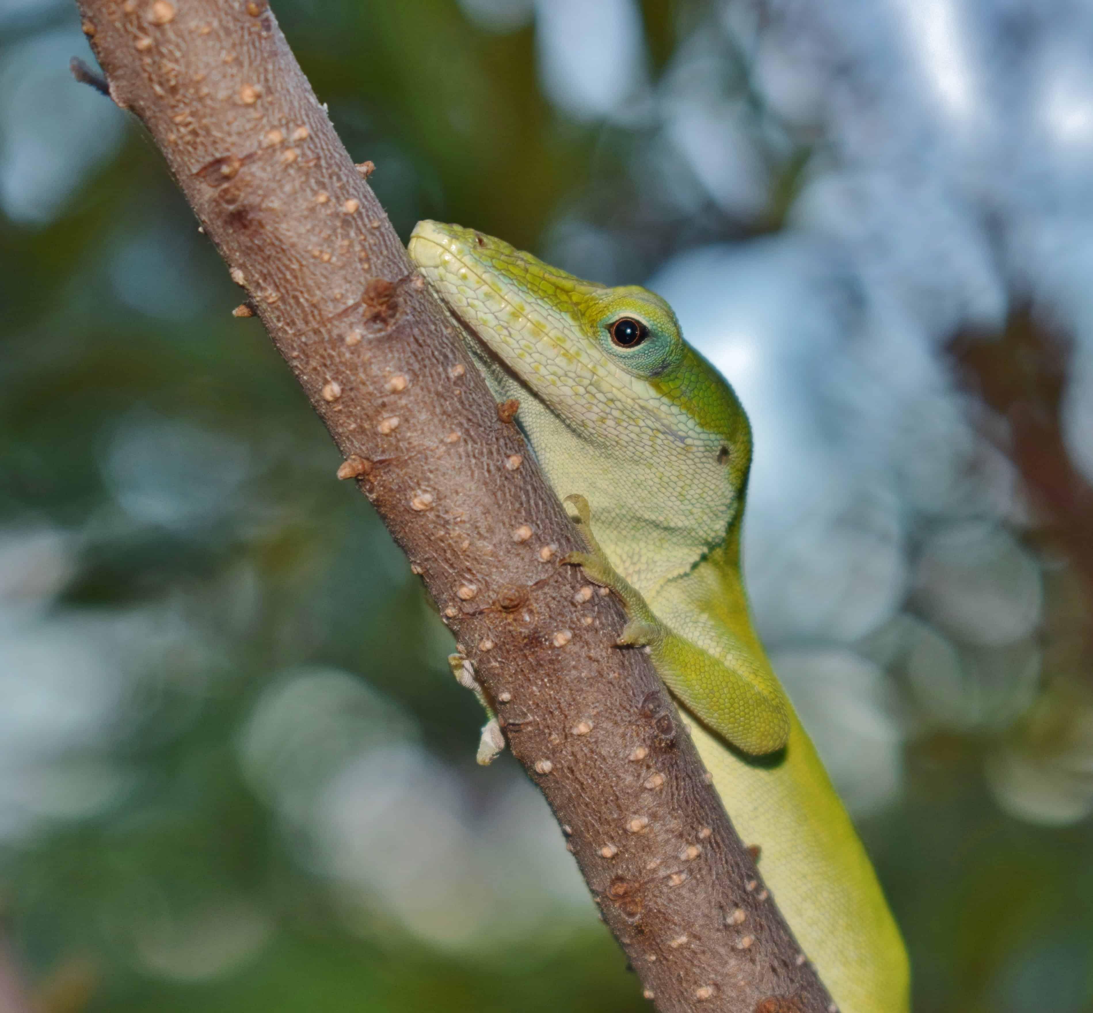 Bien-aimé Image libre: nature, faune, camouflage, jungle, arbres, reptile  RK44
