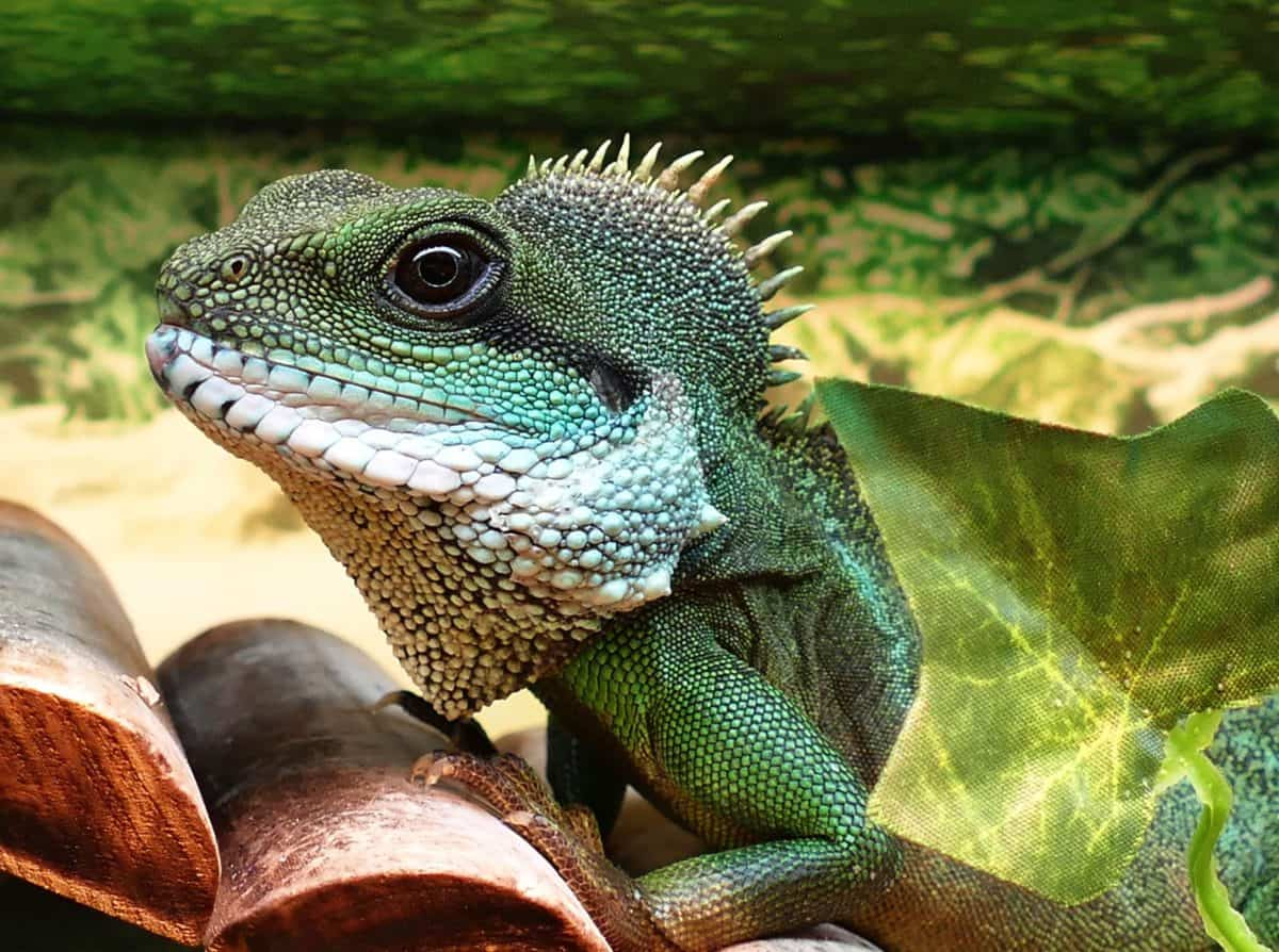 reptile, nature, lizard, wildlife, iguana, dragon, eye