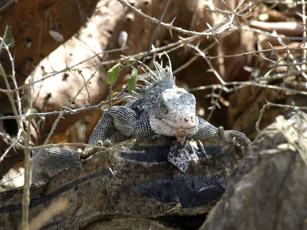 wildlife, reptile, animal, nature, camouflage, lizard, tree, outdoor