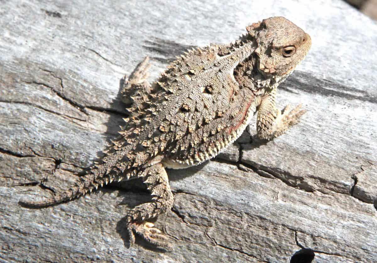 animal, wildlife, reptile, nature, lizard, camouflage, wild, wood, daylight
