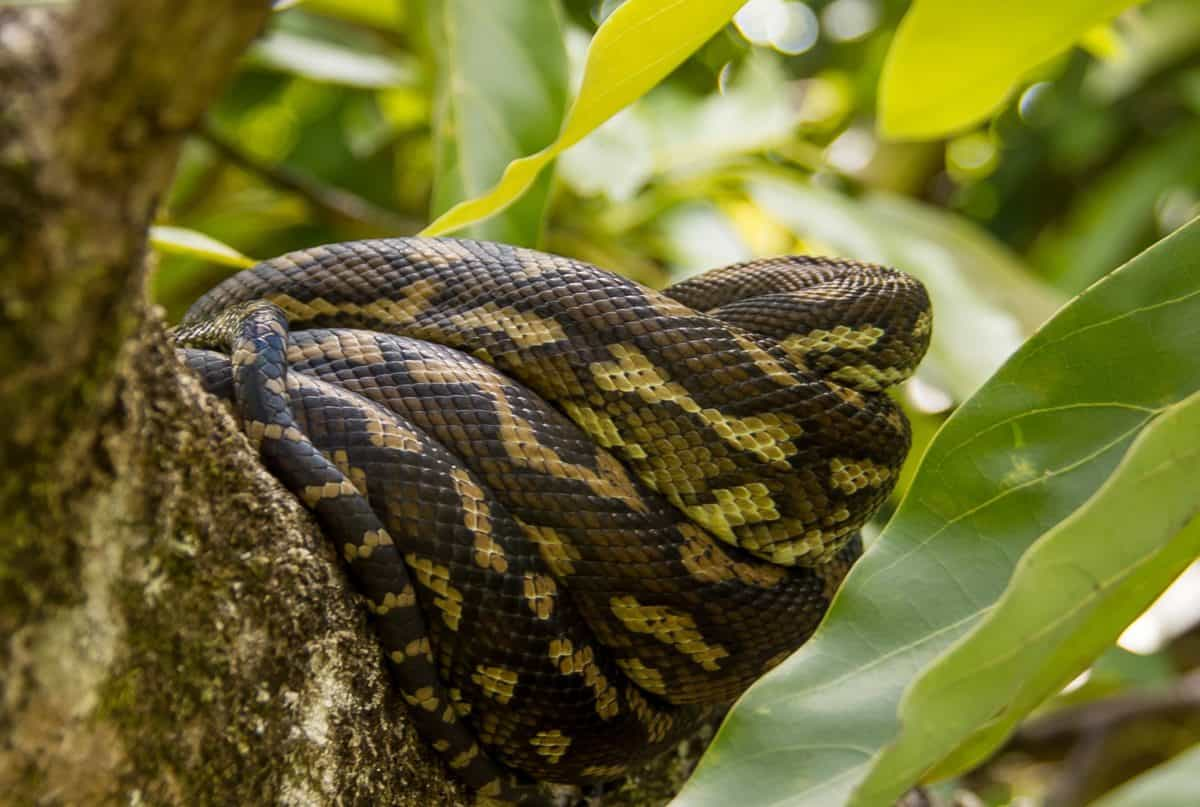 wildlife, exotic, python, snake, skin, colorful, nature, reptile, animal