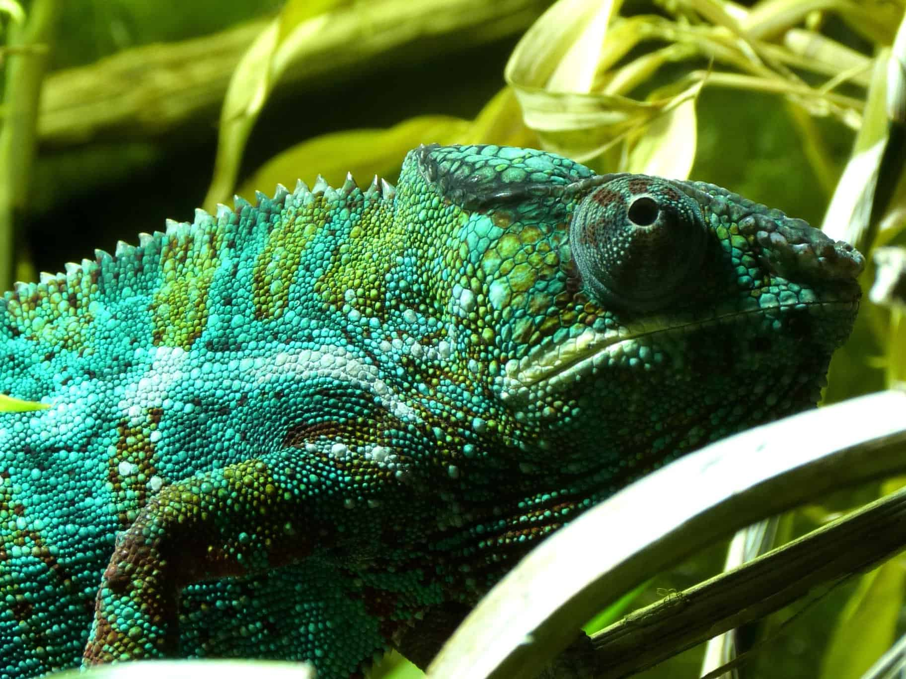 free picture reptile nature lizard camouflage