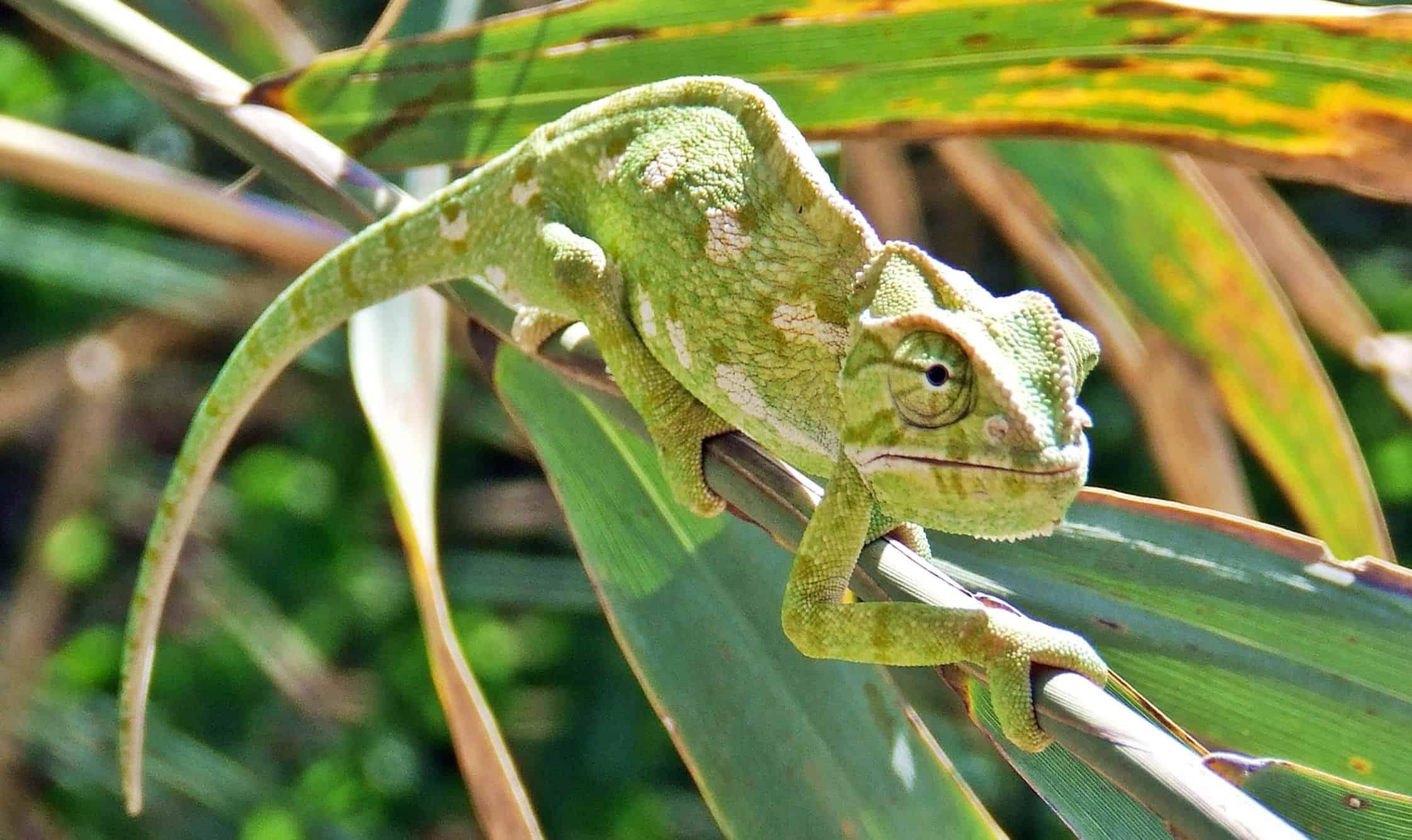 Super Image libre: animaux exotiques, camouflage, arbre, animaux, jungle  JP82