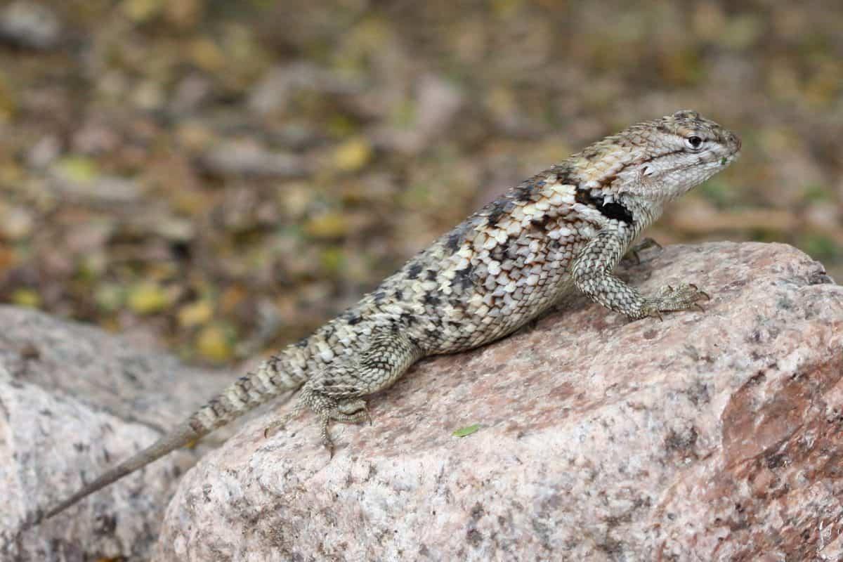 Reptilien, Natur, Tarnung, Tiere, Wild, Tier, Eidechse, Chamäleon