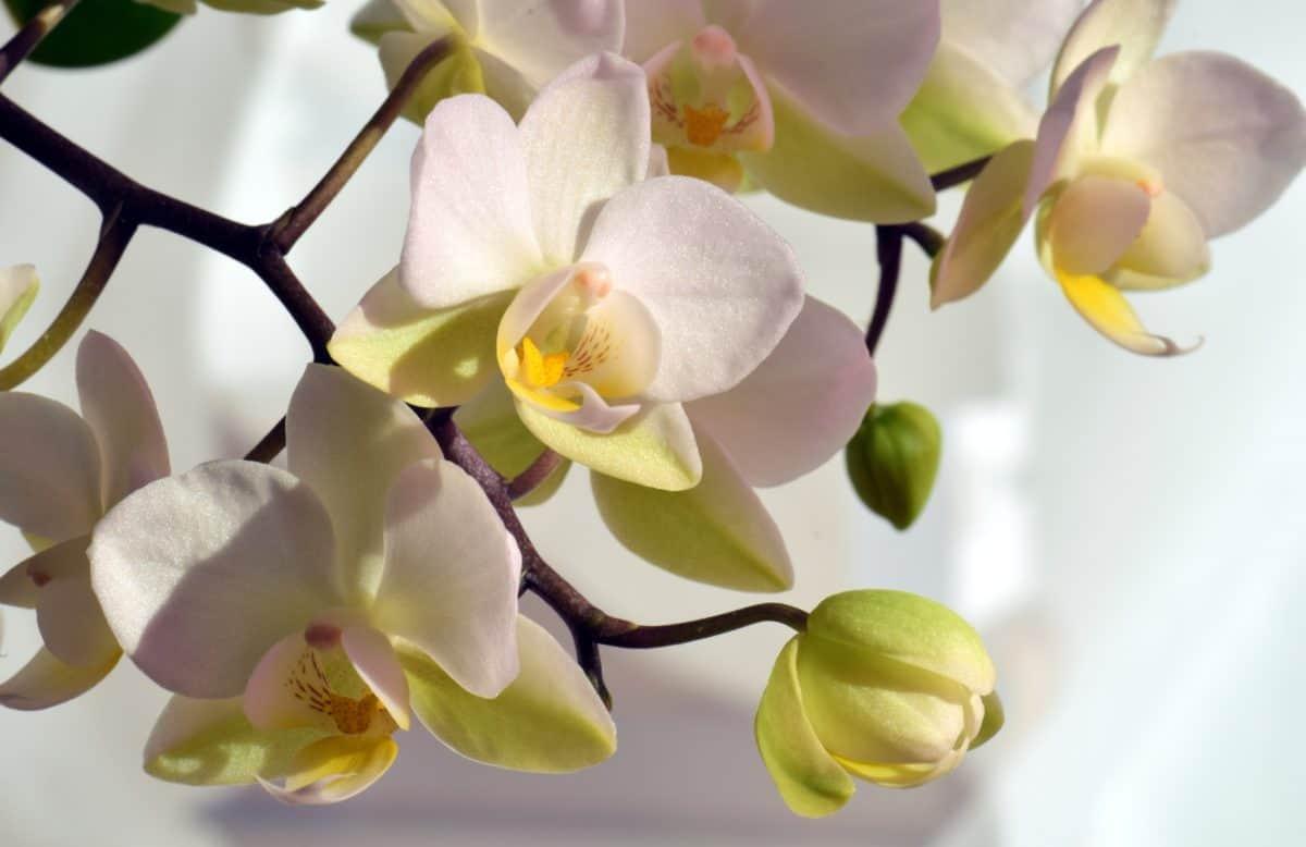 Zweig, Blütenblatt, Blume, exotisch, Flora, Natur, Blatt