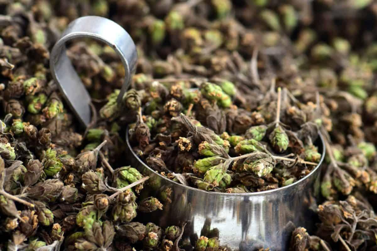 Imagen gratis alimentos hojas naturaleza metal pote for Hierba jardin