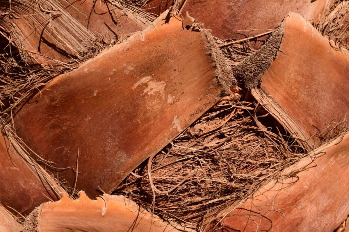 arbre, palmier, nature, écorce, fibre, brun