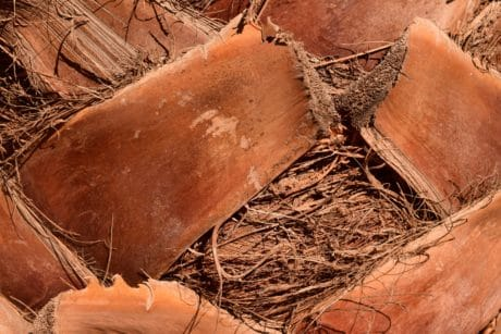tree, palm, nature, bark, fiber, brown
