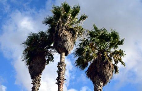 cielo azul, palmera, planta, playa, al aire libre