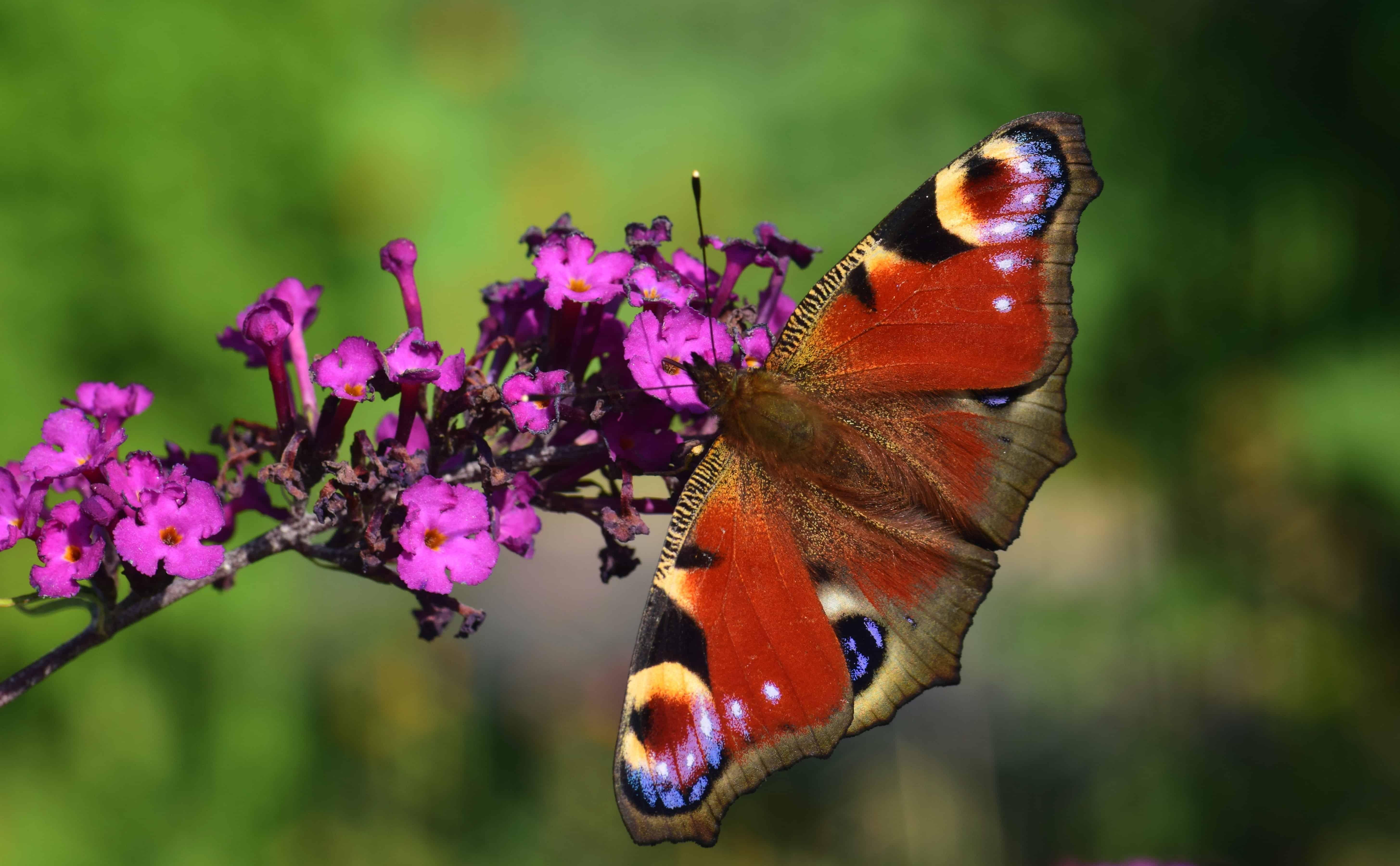 kostenlose bild natur makro tageslicht wildblumen