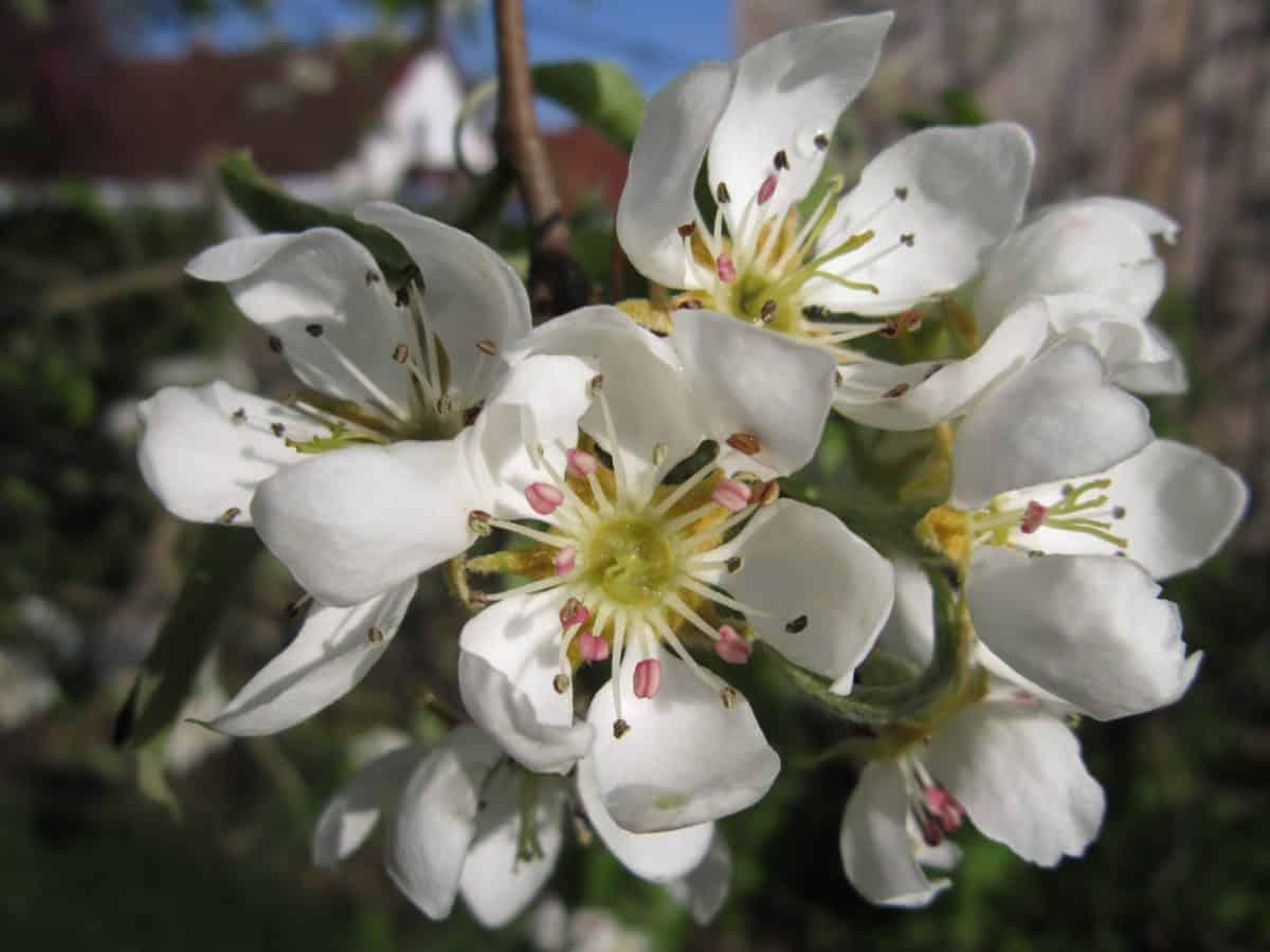 nature, jardin, branche, lumière du jour, pistil, macro, flore, fleur