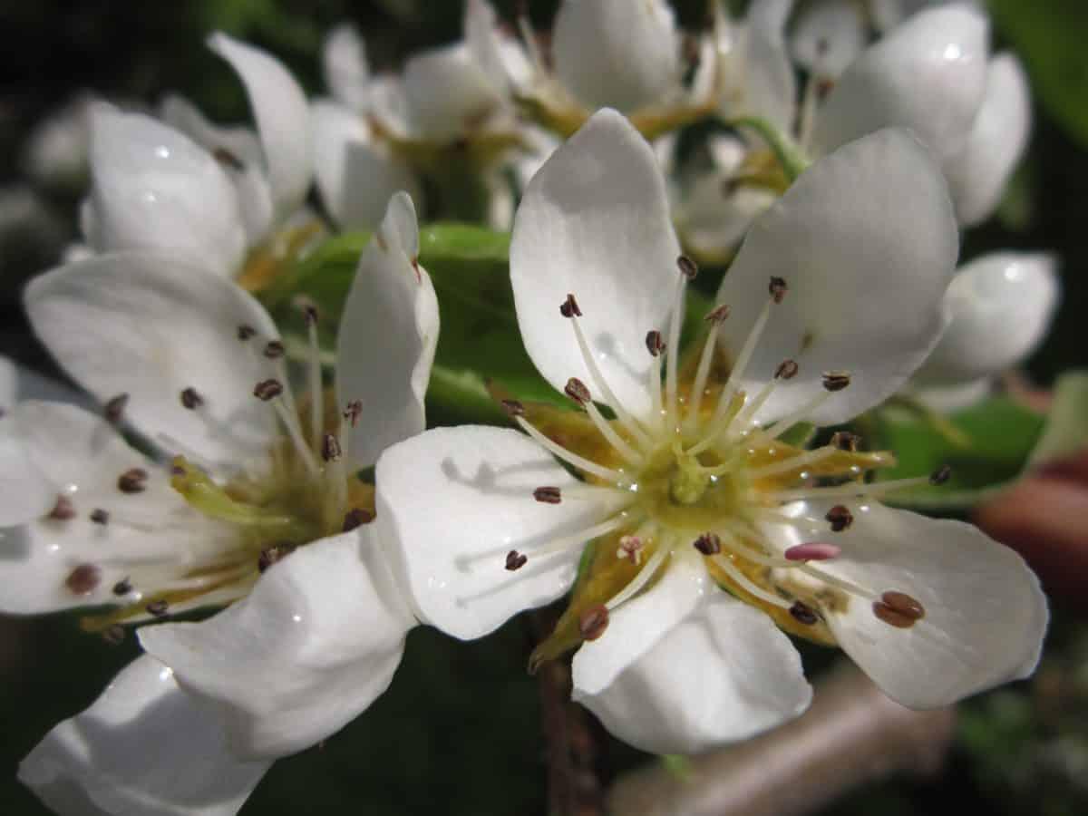 leaf, flora, nature, white flower, petal, plant