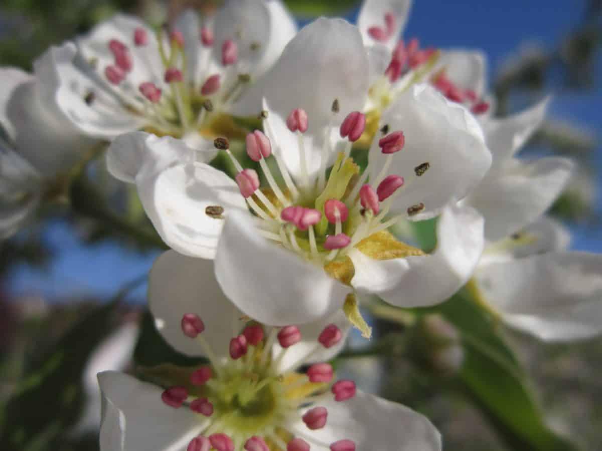 leaf, garden, macro, pistil, nature, petal, flower, flora
