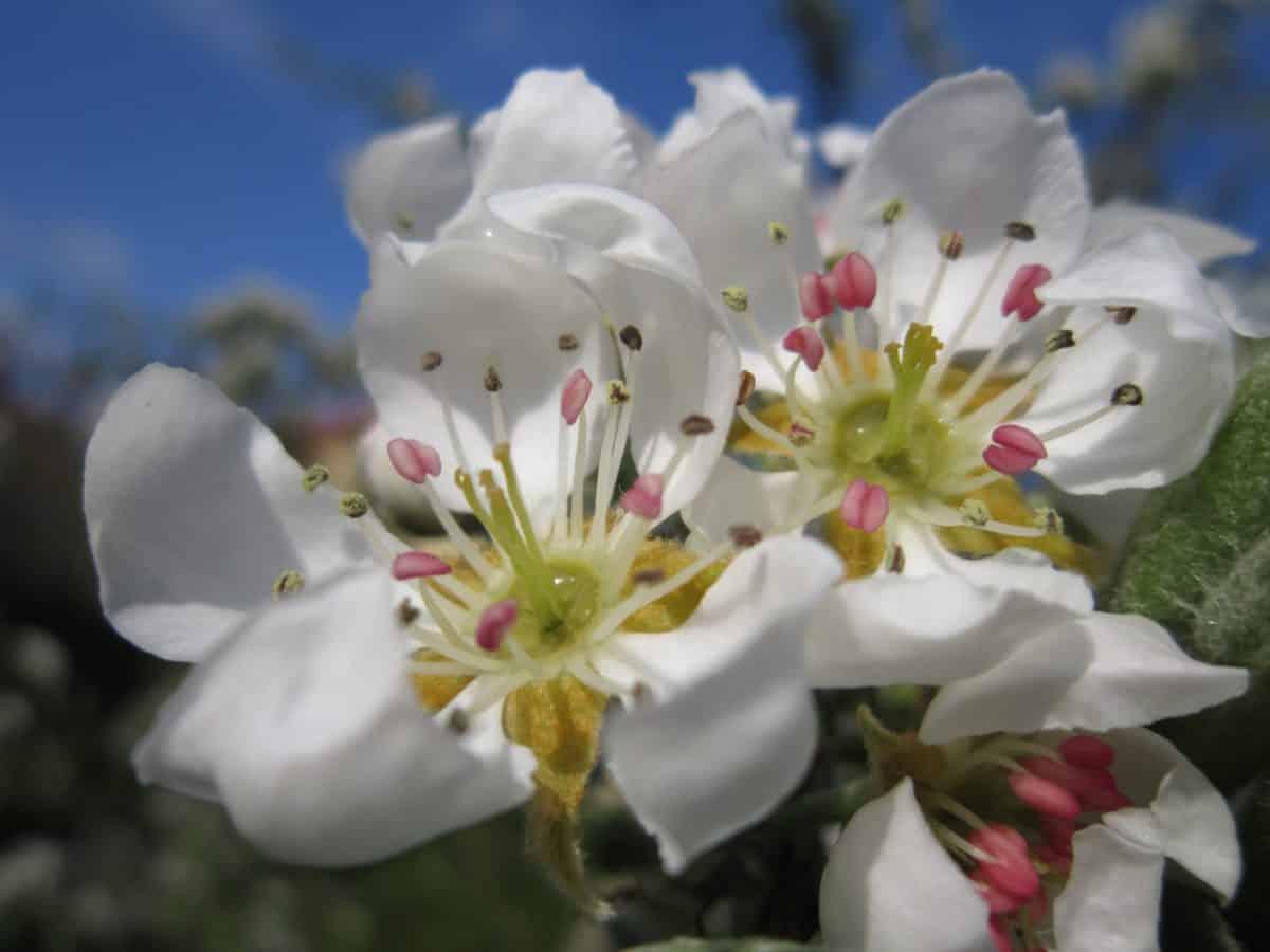 flore, jardin, pétale, nature, arbre, fleur blanche, printemps, lumière du jour