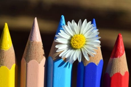 pencil, education, wood, creativity, flower, colorful, macro