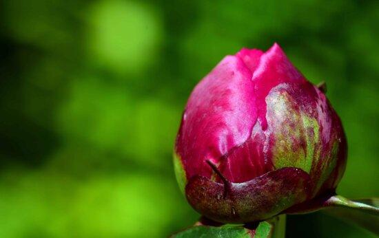 Sommer, Flora, Natur, Blatt, Blume, Rose, Blütenblatt, Pflanze, Blüte