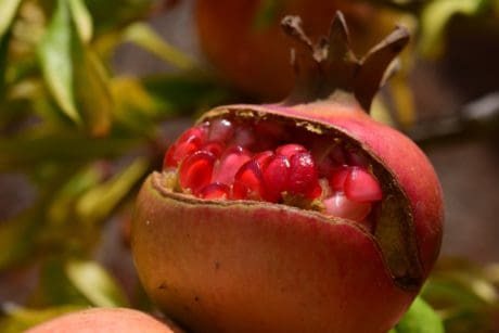 leaf, fruit, food, nature, pomegranate, sweet, berry, dessert