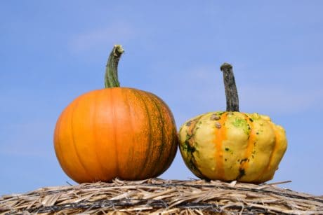 food, sky, pumpkin, straw, agriculture, food, dry, vegetables, plant, sky