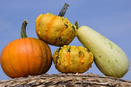 pumpkin, straw, food, dry, vegetables, plant