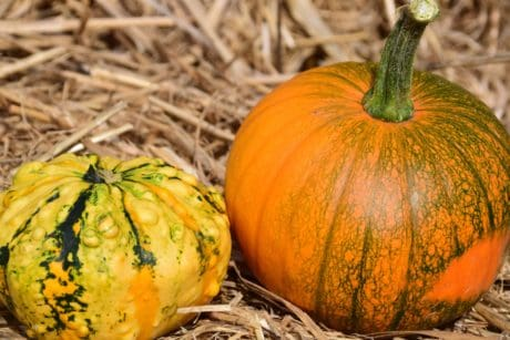 pumpkin, vegetable, autumn, food, organic