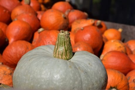 vegetables, food, agriculture, pumpkin, nature, autumn