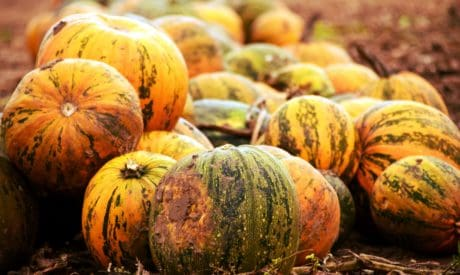 pumpkin, autumn, vegetables, food, organic, plant