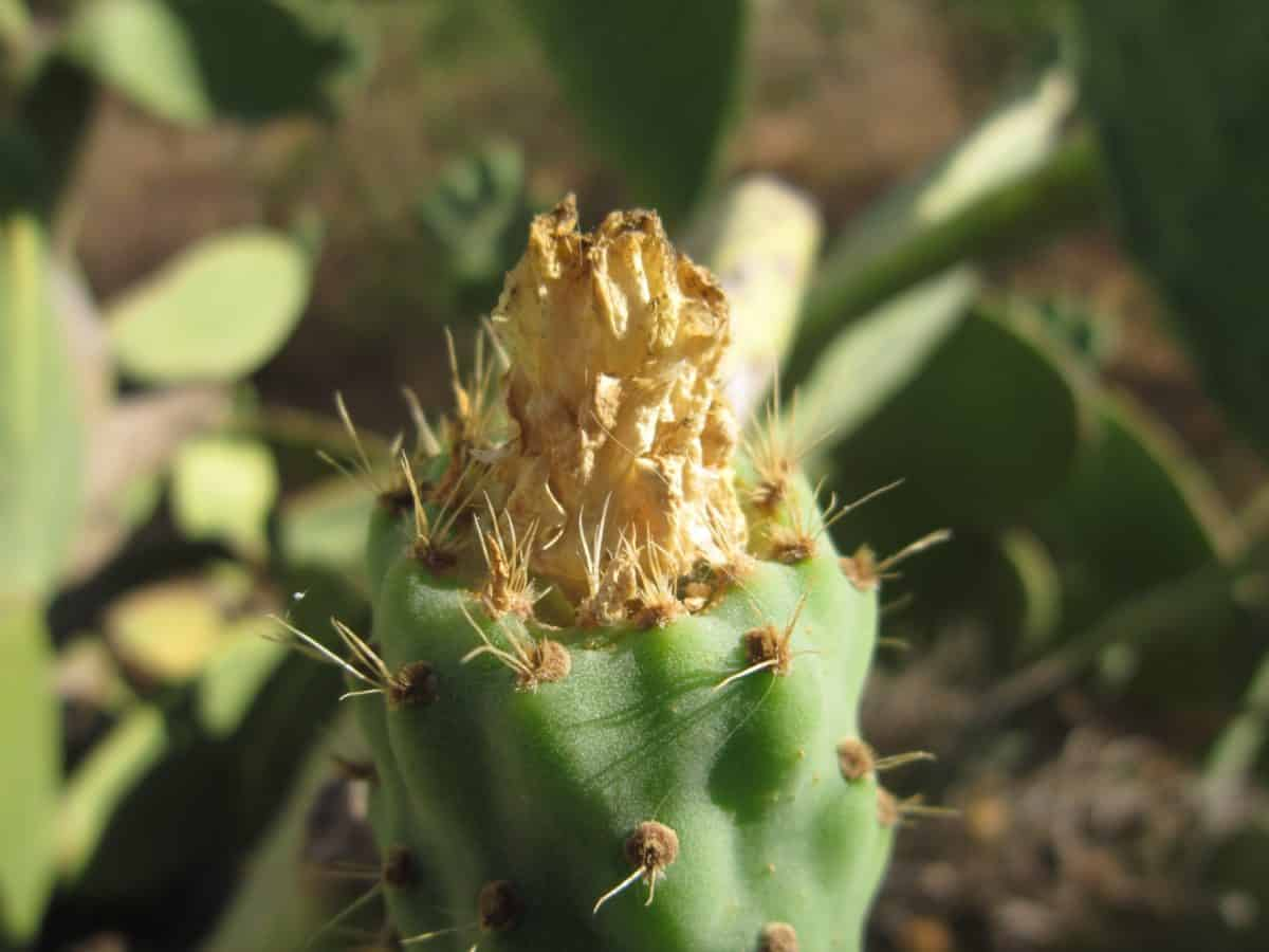 exotic, nature, sharp, flora, cactus, leaf, spike, desert