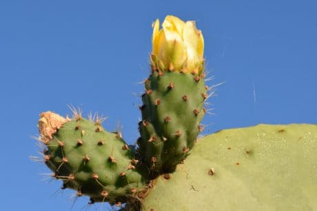 sharp, flora, nature, cactus, desert